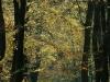 Lužní les 1