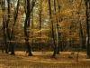 Lužní les 2