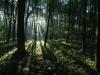 Lužní les 3